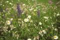 Blumenwiese Bild