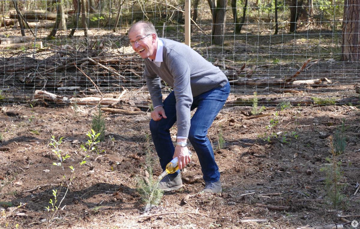 """Heddesheims Bürgermeister Michael Kessler """"begießt"""" eine der Douglasien, die im Auftrag der Gemeinde Heddesheim im Viernheimer Wald vor vier Wochen gepflanzt wurde. Foto: Stadt Viernheim"""